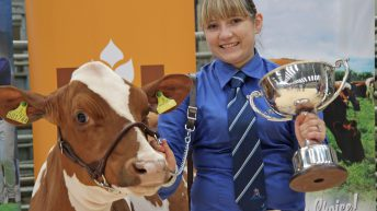 Entry date looming for Northern Ireland multi-breed calf show
