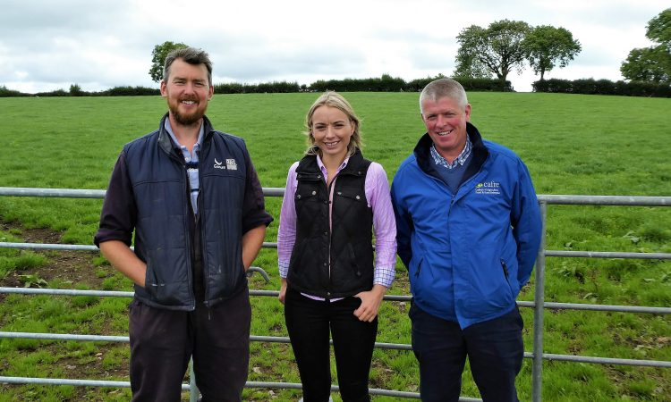 Using fake grass to boost utilisation of the real stuff in Co. Tyrone
