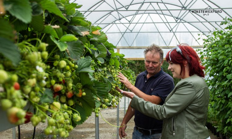 Wheelock Fruits drives expansion as Taste Wexford gains ground