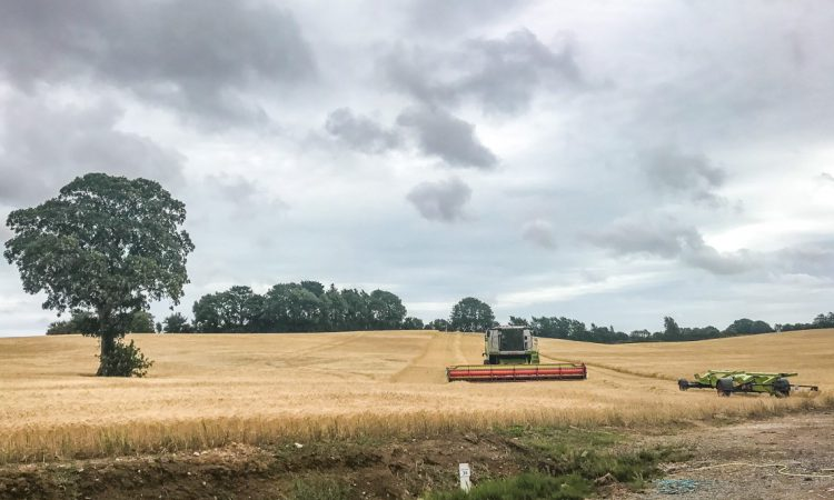 Tillage focus: Sowing forage crops for dairy farmers