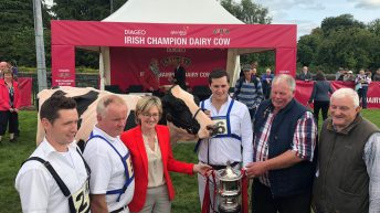 'Megan' goes one better as Diageo Baileys Champion Dairy Cow is crowned