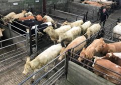 Cattle marts: More action, demand and improved prices