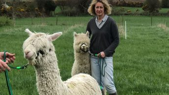Wexford woman produces good food in harmony with nature