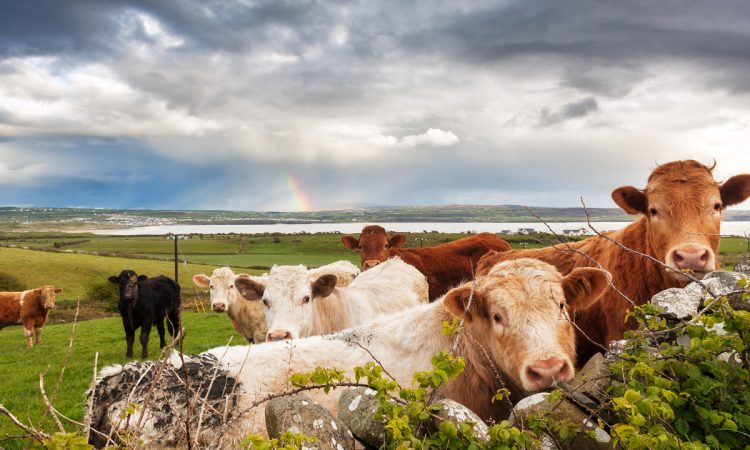10 tips for choosing the right farm insurance