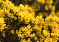 Minister must allow managed gorse burning in March – IFA