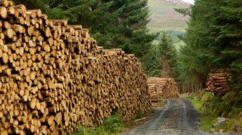 Cork farmer generates €180,000 from 6.5ha of Sitka