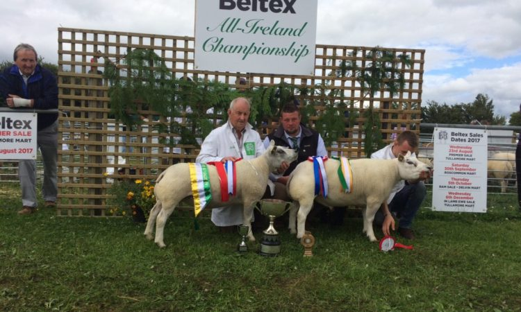 Clearance sale of All-Ireland winning Beltex flock this weekend