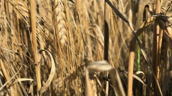 Teagasc partners up with an 'alternative' EU research project