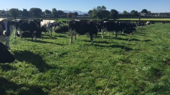 Striving to produce 100,000kg of milk solids in Co.Tipperary