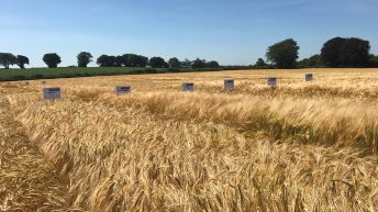 Decision time on winter barley seed