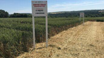 Bennington tops the winter wheat list on yield