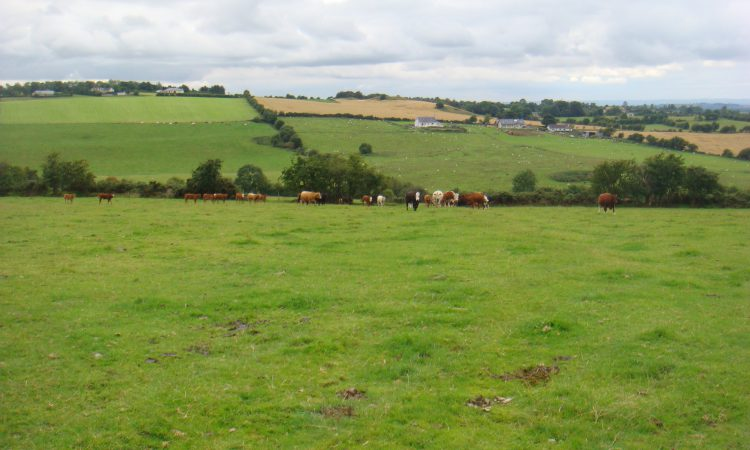 158ac Dunlavin grass farm 'ideal for young farmer starting out'