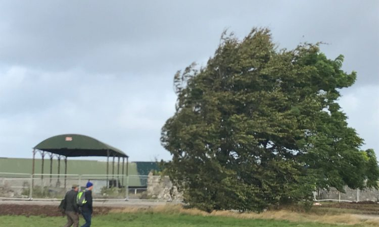 Farm walk cancelled as Storm Callum approaches