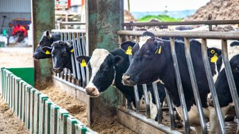 Average net margins on dairy farms forecasted to decrease by 23% per hectare in 2021