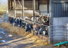 'Farms must act now to ensure winter feed demands are met'