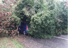 Tree lands on car in Offaly as Storm Ali strikes