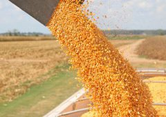 Grain price: Wheat and corn move down