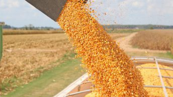Grain price: Big drop on Friday