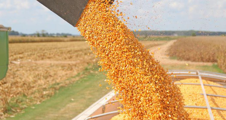 Grain price: Slight improvement in wheat…concerns for corn and soybean yields