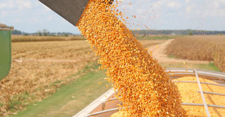 Grain price: Global corn production forecast at 'record-high'