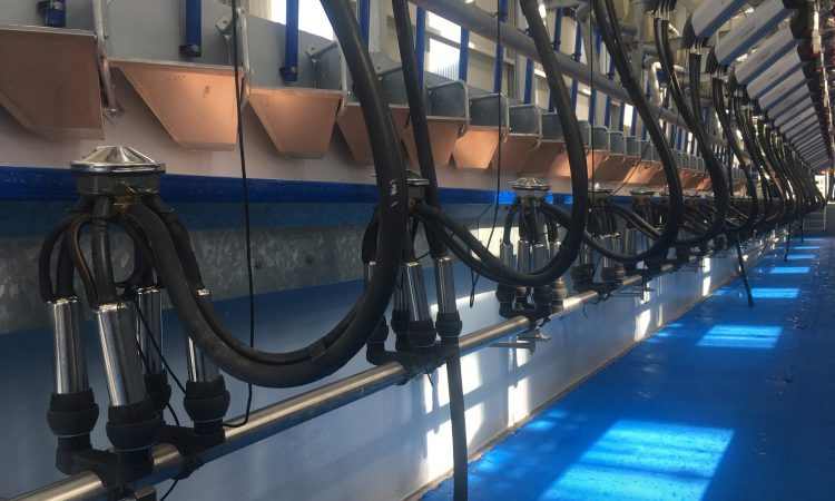 'Halved the milking time': New parlour lives up to billing in Gurteen