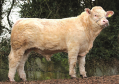 New panel of €5/straw Gene Ireland bulls formed