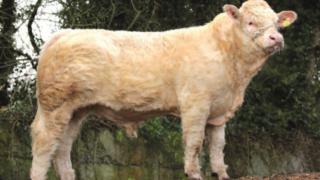 New panel of €5/straw Gene Ireland bulls formed