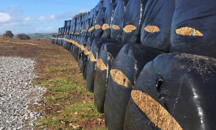 Overnight perpetrator leaves 111 bales slashed