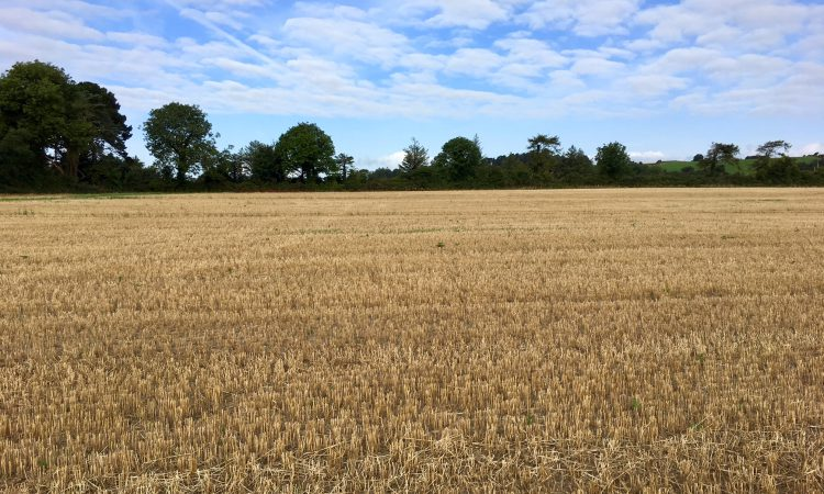 Oulart land sells for €12,600 per acre