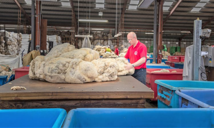 Ulster wool prices expected to be up 10p/kg on 2017