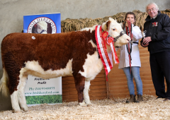Pics and prices: Hereford Premier Autumn Sale