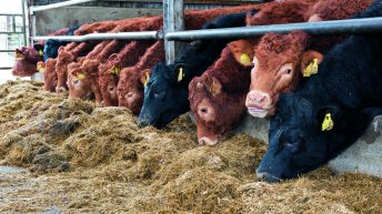 'There is clear basis for beef price increase' – ICMSA