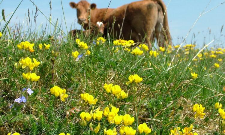'Farming for nature' public vote launched