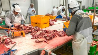 Beef focus: Behind the scenes of a French slaughterhouse and boning hall