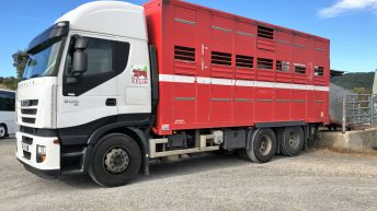 Beef focus: Exporting over 1 million live cattle in France