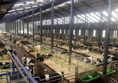 Dairy focus: Why one 700-cow farm decided to go down the robotic milking route