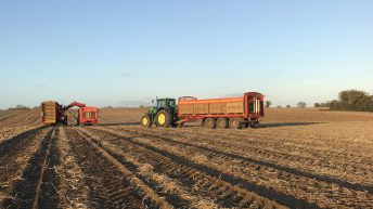 Tillage focus: Potato harvest in full swing