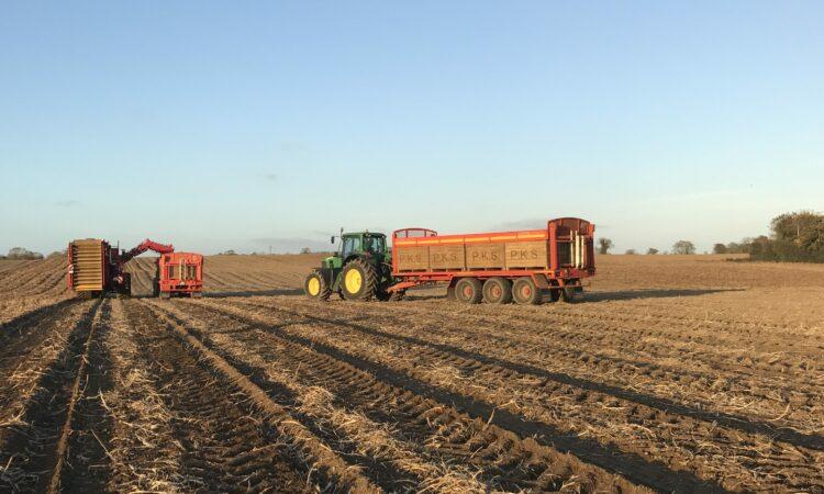 Tillage focus: Potato harvest in full swing