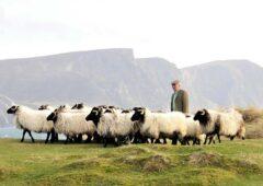 Achill farmer shortlisted for national farming award