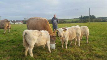 3:00am triplets: Rossie farmer recounts Charolais surprise