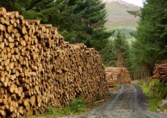 Cork farmer generates €180,000 from 6.5ha of Sitka