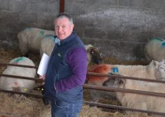 New sheep specialist appointed by Teagasc