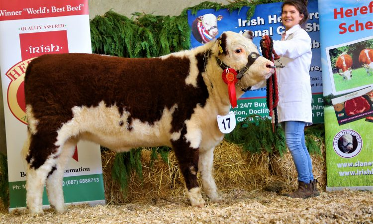 Pics: Irish Hereford Calf Show sees over 100 animals compete