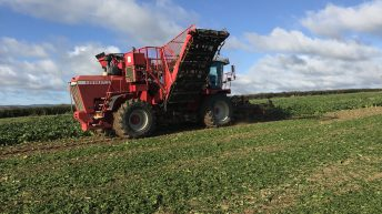 Tillage focus: Pulling beet with a self-propelled harvester in Co. Laois