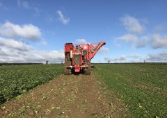 Positive reaction to beet…ambitious target set