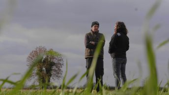 'We don't like to use fungicides unnecessarily'