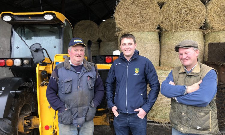 Elite Angus sale to attract €3,000 subsidy winners