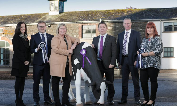 Countdown is on to this year's Royal Ulster Winter Fair