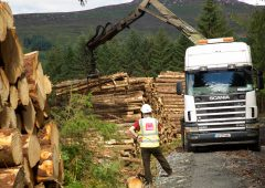 Forest industry: Department 'consistently missing its own targets'