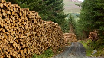 Dáil committee gives approval to fast-track reform of forestry appeals system